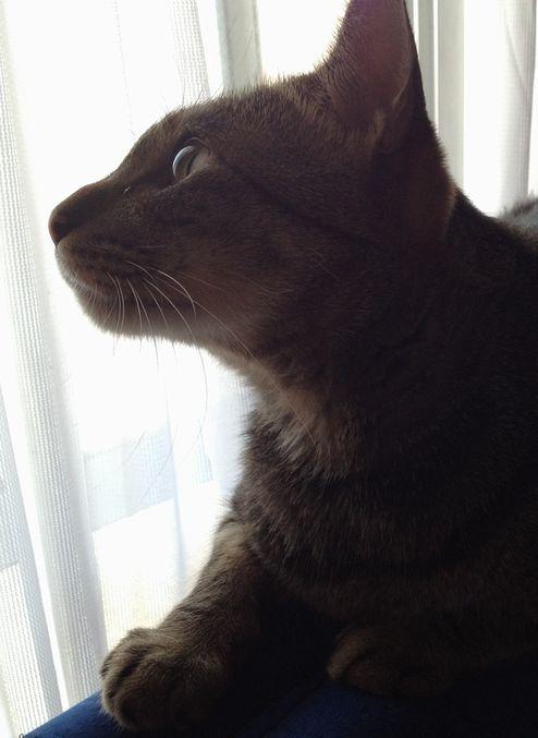 窓辺のミー坊♪