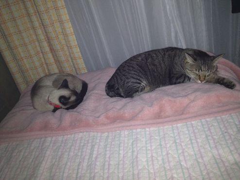 毛布寝とられた・・。