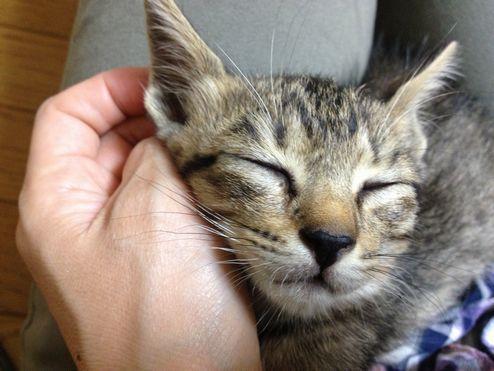 チビスケの寝顔2
