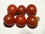 トマト141027