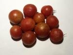 トマト141114