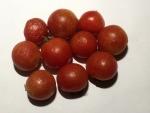 トマト141115
