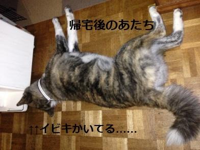IMG_0050a.jpg