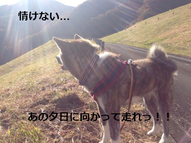 IMG_0069a.jpg
