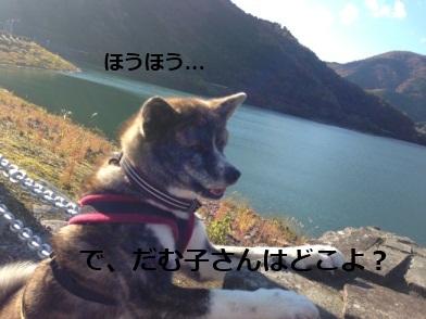 IMG_0072_20131216083120764.jpg