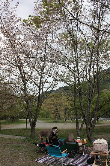 4月青野原