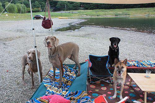9月湖畔キャンプ
