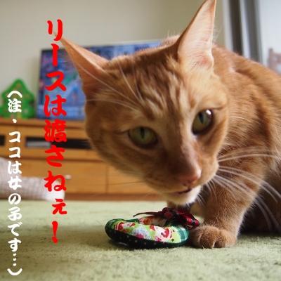 目つき悪いよ…(^_^;)