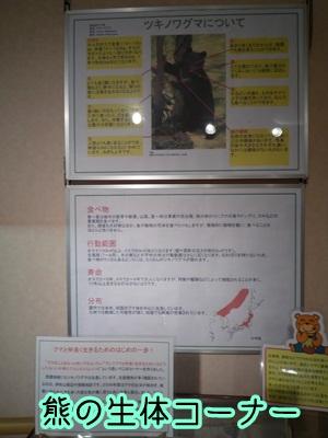熊P1340761