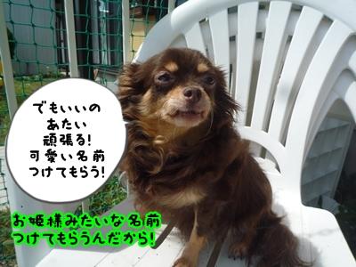 ちくべりーP1370832