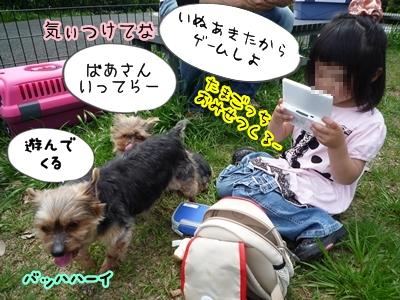恋人P1350578