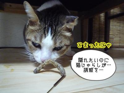 あゆみP1370989