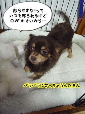 ちくP1380425