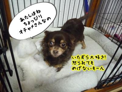ちくP1380426