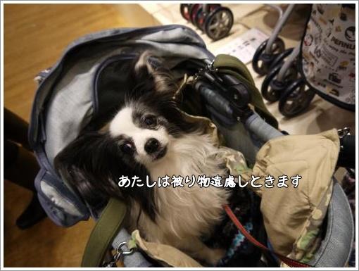 063_convert_20130121122519.jpg