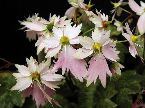 PA140176.jpg