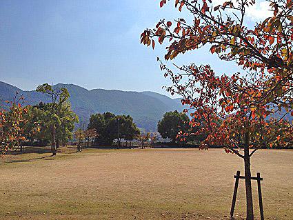撮影で使用した公園