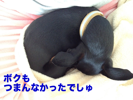 20120514-1.png