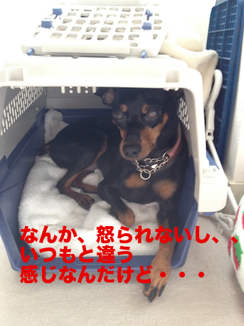 20120729-4.png