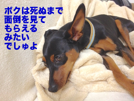 20120822-1.png