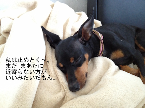 20120828-1.png