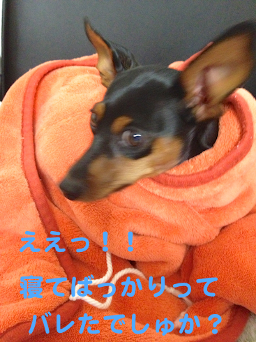 20121011-1.png