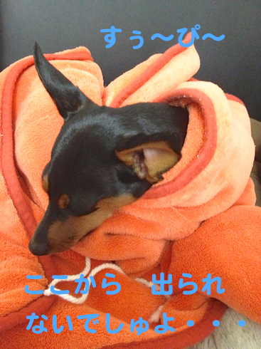 20121011-2.png