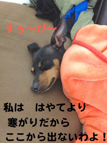 20121011-3.png
