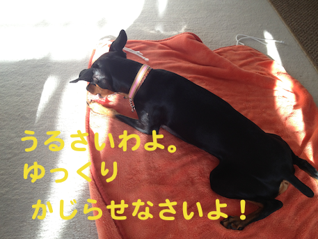 20121025-4.png