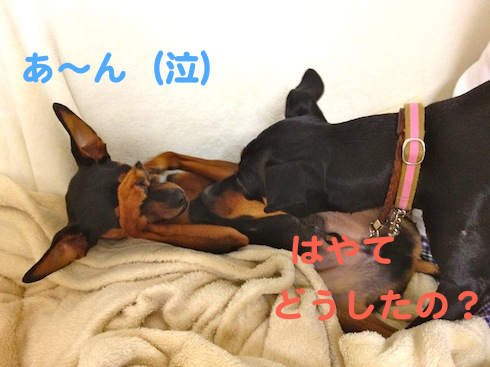 20121026.png