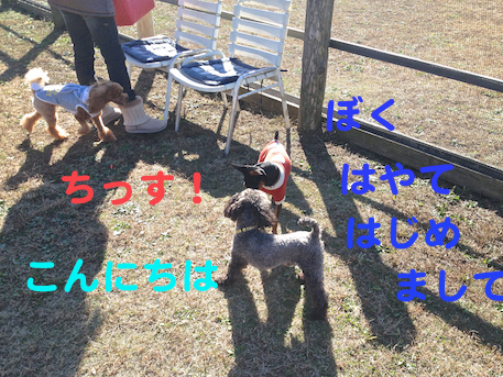 20121126-1.png