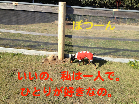 20121126-5.png