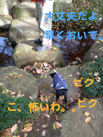 20121206-1.png