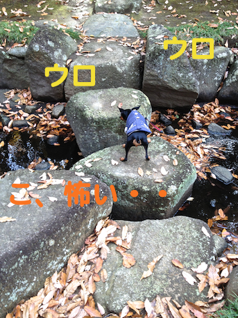 20121206-10.png