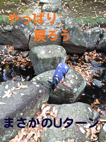 20121206-11.png