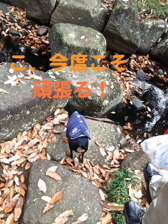20121206-7.png