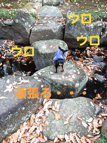 20121206-9.png