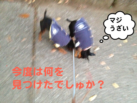 20121208-6.png