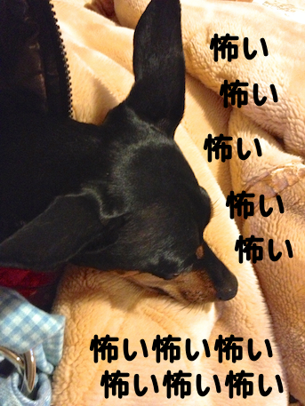 20121208-7.png