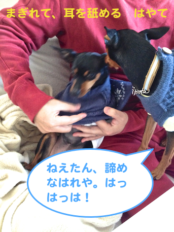 20121215-3.png
