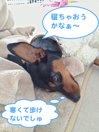 20121228-2.png