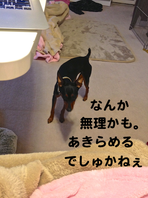 20121230-3.png