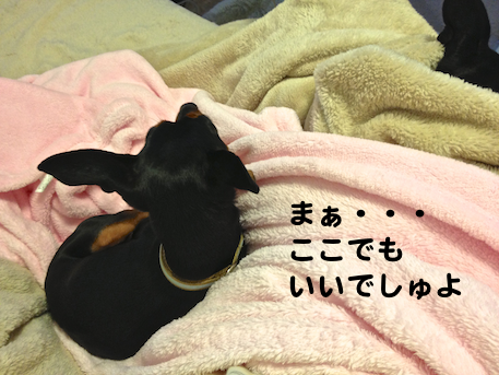 20121230-4.png