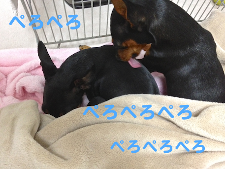 20130105-4.png