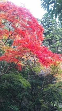 fc2blog_20121122022742b34.jpg