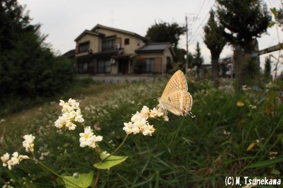131018uranamishijimi1342.jpg