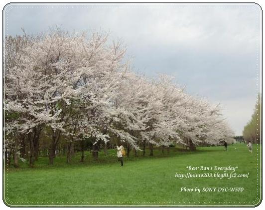 森林公園~桜