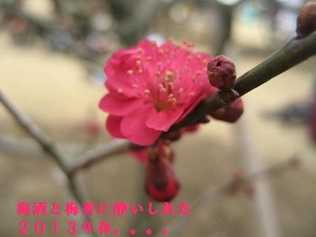 3月水戸の梅まつり