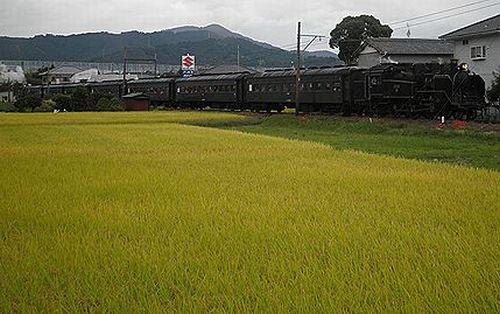 大井川鐵道SL急行1002列車「かわね路12号」(C11 190&C11 227プッシュプル)(2012年10月7日・五和~神尾間)