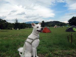 嬬恋キャンプ2012